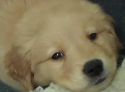 Proč jsem se rozhodla psát blog jak zbavit psy strachů a fobií?