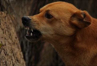 angry dog čl