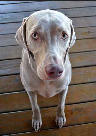 fearful dog článek