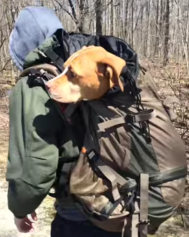 dog in backpack - článek