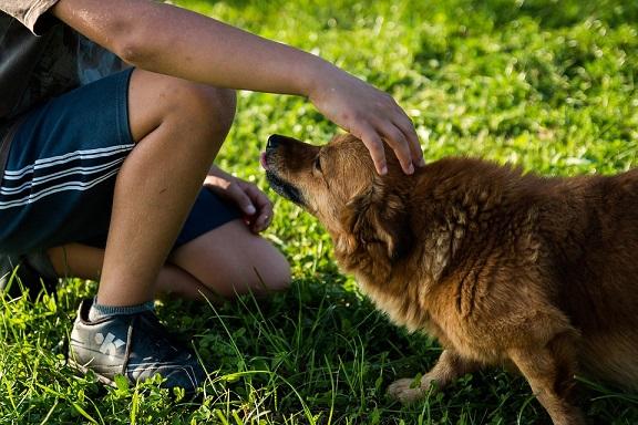 pes se bojí čl
