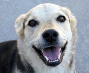 smiling-dog-cl-cs