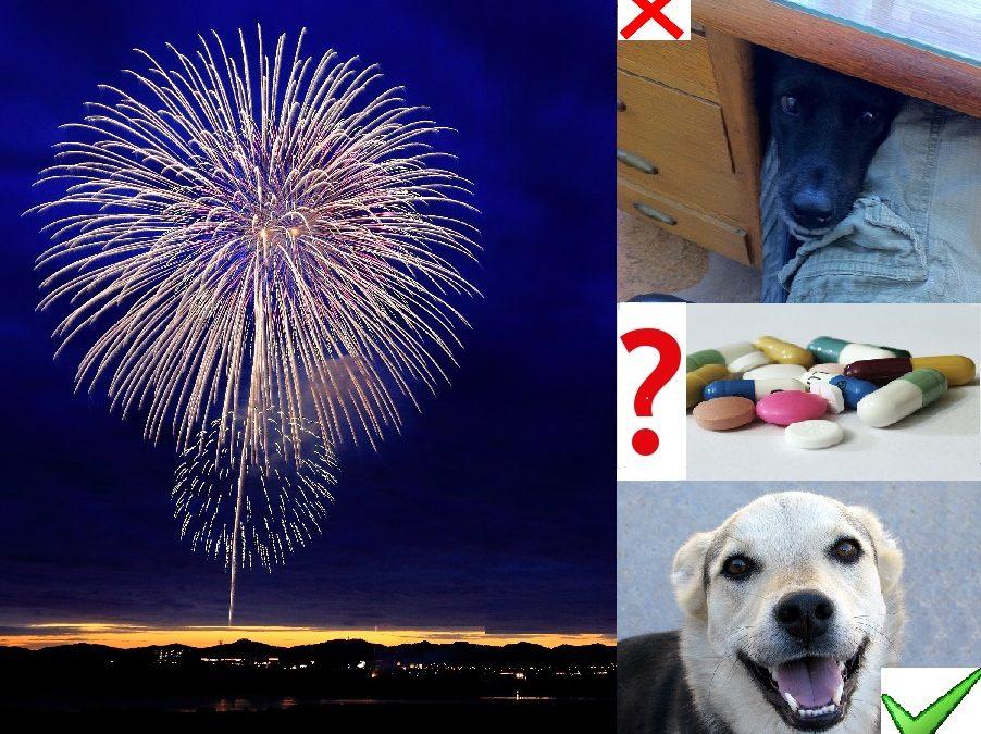 Zbavte svého psa strachu z ohňostroje a petard! ;-)