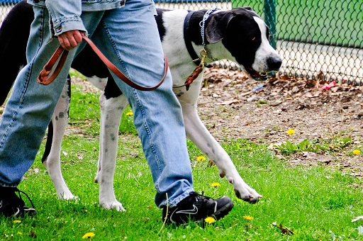 big-dog-walks-cl