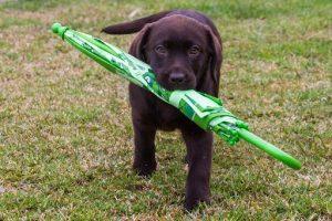 dog-with-umbrella-cl