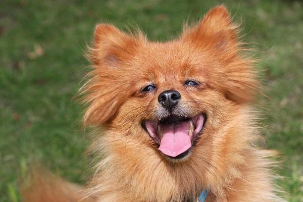Umí se psi smát?