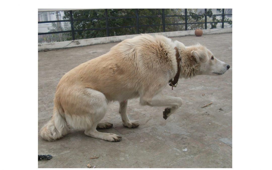 Proč pes kousl/zvíře zaútočilo?