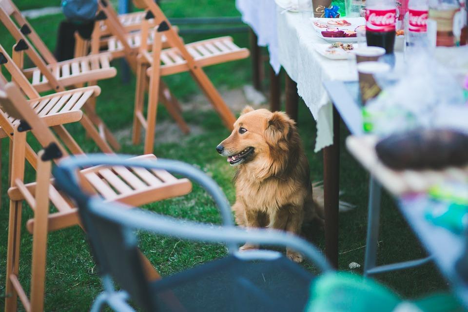 Proč pes zlobí + jak mít chvilku klidu nejen při návštěvách