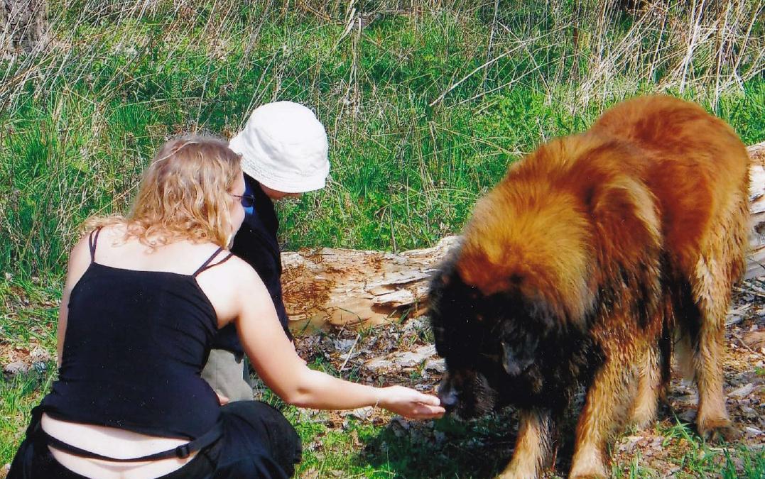 Prázdniny, děti a psi
