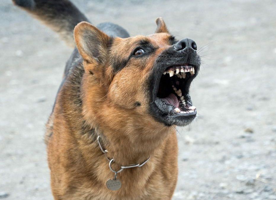 Vystartoval po nás cizí pes! Jak se zachovat?