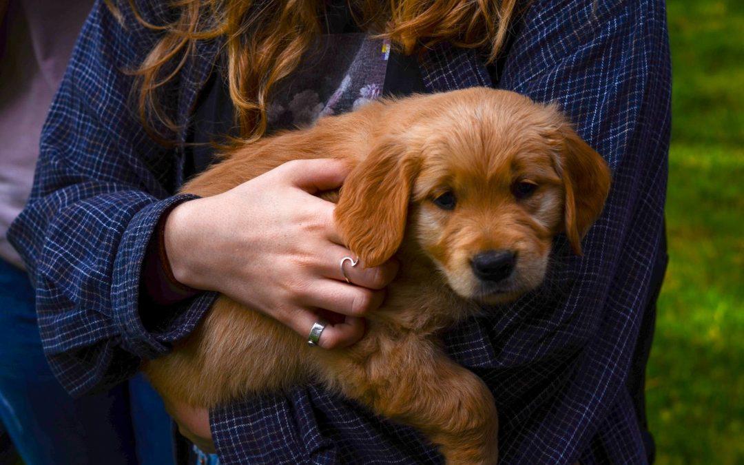 Zvedání psů/štěňat do náruče