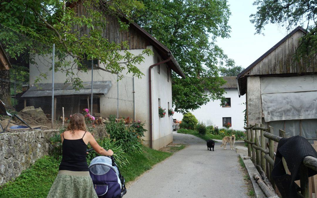 Slovinsko – psi vítáni
